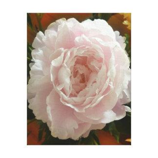 Impressão Em Tela peônia cor-de-rosa da Dobro-flor no fundo morno do