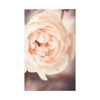Impressão Em Tela Rosa de inverno