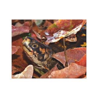 Impressão Em Tela Tartaruga de caixa no outono
