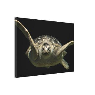 Impressão Em Tela Tartaruga de mar verde