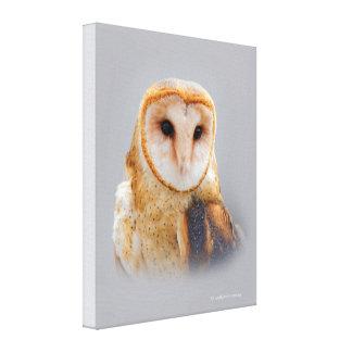 Impressão Em Tela Uma coruja de celeiro sereno e bonita