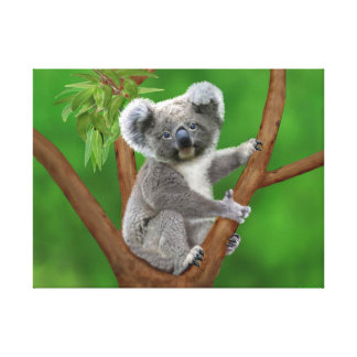 Impressão Em Tela Urso de Koala de olhos azuis do bebê