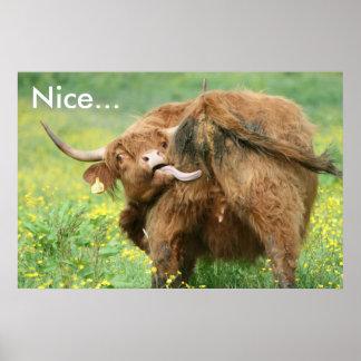 Impressão engraçado do poster da vaca de Aberdeen