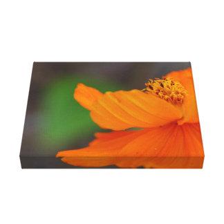 Impressão floral alaranjado das canvas