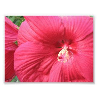 Impressão floral da fotografia
