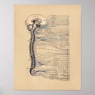 Impressão humano do vintage da anatomia dos nervos