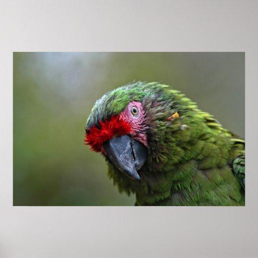 Impressão: Macaw militar