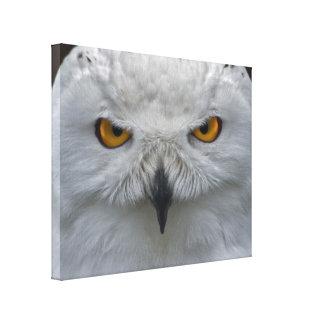 Impressão nevado das canvas do retrato da coruja