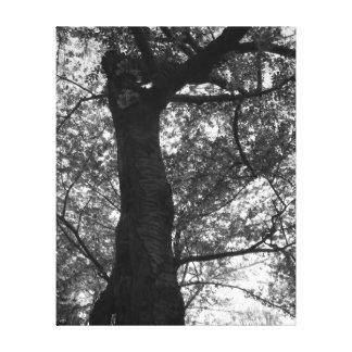 Impressão preto e branco da árvore da flor de impressão em tela
