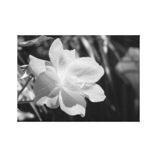 Impressão preto e branco das canvas da flor impressão em tela