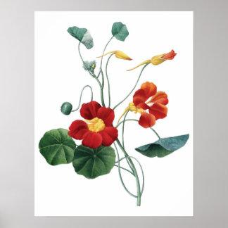 Impressão SUPERIOR botânico da QUALIDADE da chagas