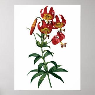 Impressão SUPERIOR botânico da QUALIDADE do lírio