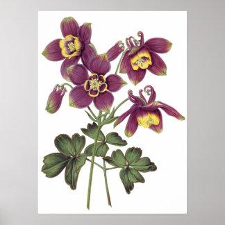 Impressão SUPERIOR botânico da QUALIDADE dos colum