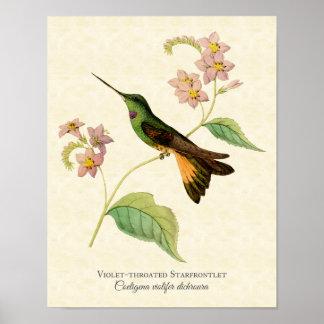 impressão Violeta-throated da arte do colibri de S