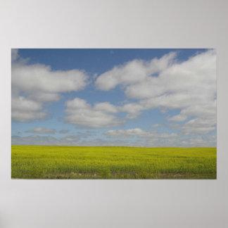 Impressões da paisagem de Manitoba do impressão do