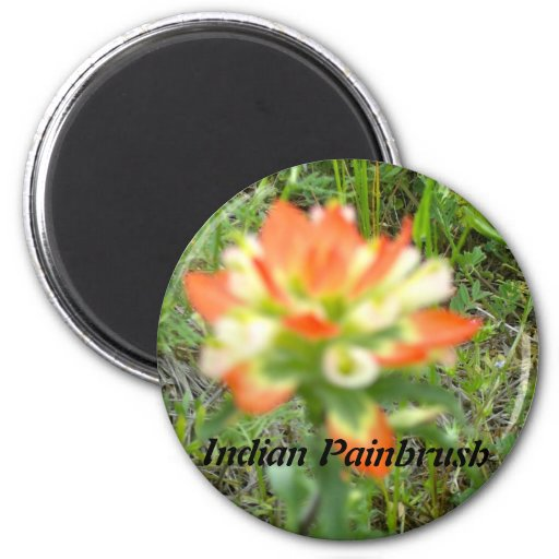 Indiano Painbrush Ima De Geladeira