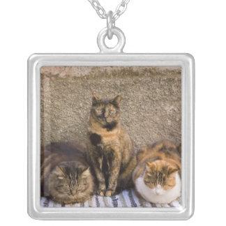 Italia, Cinque Terre, Vernazza. Três gatos ao lado Colar Banhado A Prata