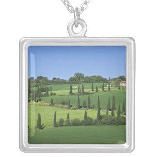 Italia, Toscânia, Multepulciano. Árvores de Colar Banhado A Prata