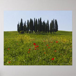 Italia, Toscânia, Val D'Orcia, paisagem Poster