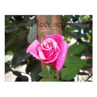 """J"""" rose """"love you pink postcard cartao postal"""