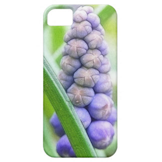 Jacinto de uva - armeniacum do Muscari Capas Para iPhone 5