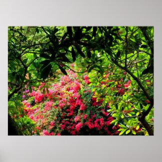 Jardim botânico da cratera de Koko Impressão