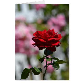 Jardim romântico dos rosas cartão comemorativo