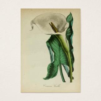 Jardinagem botânica da flor do lírio de Calla do Cartão De Visitas