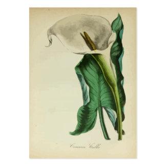 Jardinagem botânica da flor do lírio de Calla do v Cartão De Visita Grande