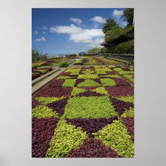 Jardins botânicos, Funchal, ilhas de Madeira, Poster