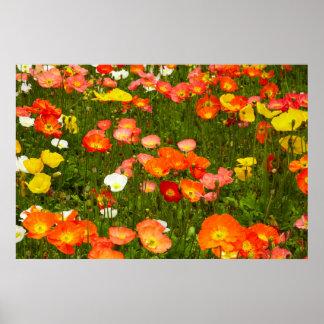 Jardins botânicos posteres