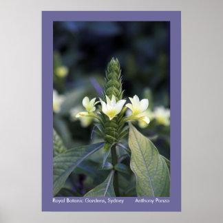 Jardins botânicos reais - Sydney, Austrália Poster