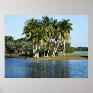 Jardins botânicos tropicais de Fairchild Pôster