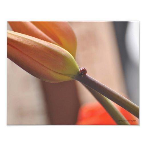 joaninha 11X14 e tulipas uma combinação bonita Foto