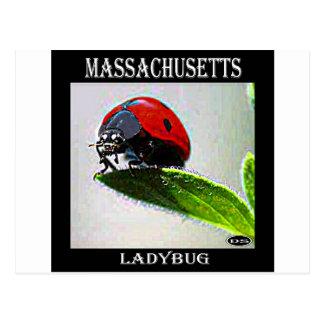 Joaninha de Massachusetts Cartão Postal