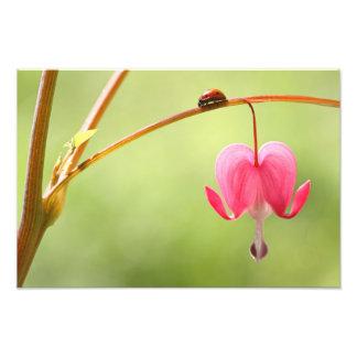 Joaninha e flor do coração de sangramento foto artes