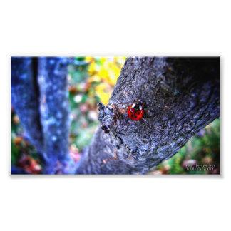 Joaninha em uma árvore de cereja 1 impressão fotográficas