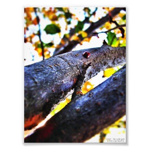 Joaninha em uma árvore de cereja 2 foto