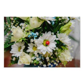 Joaninha em uma flor branca impressão de foto
