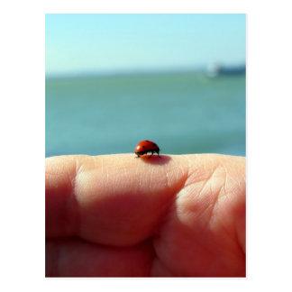 Joaninha em uma mão da mulher na frente do lago cartão postal