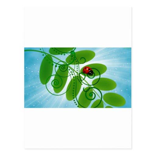joaninha - ladybird cartões postais