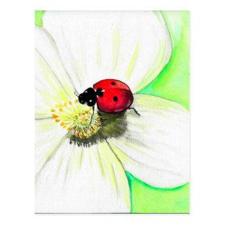 Joaninha na flor branca cartão postal