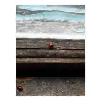 Joaninha na janela de madeira rústica cartão postal