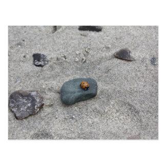 Joaninha praia cartão postal
