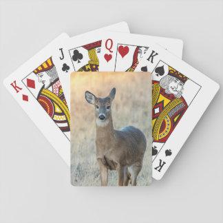 Jogo De Baralho Cervos em um campo