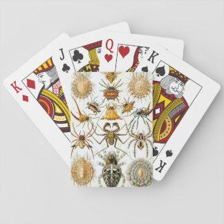 Jogo De Carta Aracnídeos por Ernst Haeckel, aranhas do vintage