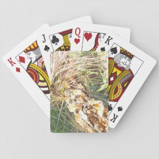 Jogo De Carta Cartões de jogo da planta do líquene e de ar