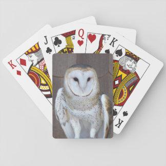 Jogo De Carta Foto da coruja de celeiro
