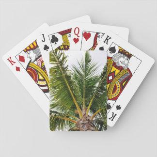 Jogo De Carta Key West, tropical, palmeira