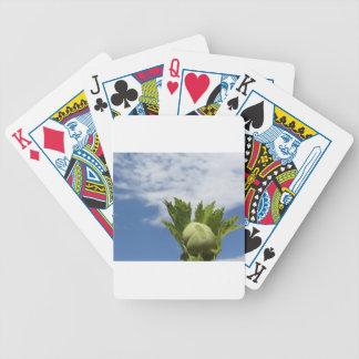 Jogos De Cartas Única avelã verde fresca contra o céu azul